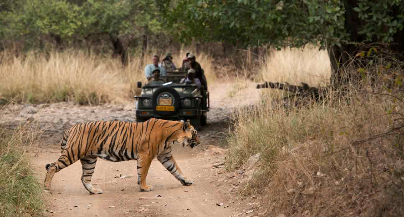 Ranthambhore Safari with Jaipur